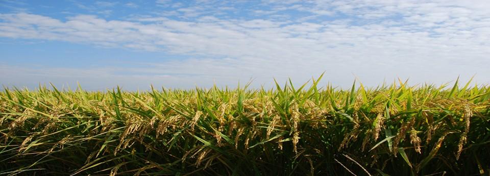 きれいな水、澄んだ空気。おいしいお米作りに最適な場所で斗伸のお米は育ちました。
